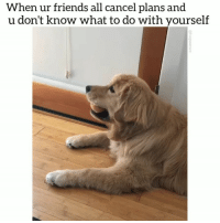 Dogs, Friends, and Funny: When ur friends all cancel plans and  u don't know what to do with yourself Guess it's just me and you ballie 😂❤️😭Tag your friends! @funpawcare . . @chasin_chester party puppylove doglover puppies puppy pupper puppers puppiesofinstagram dogstagram golden goldens goldenretriever goldenretrieversofinstagram goldenretrievers dogs dog pet pets ball ballie funny paw paws love dogsofinstagram newpuppy newdog doglove doglovers furbaby