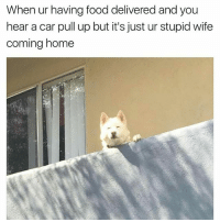 Food, Latinos, and Memes: When ur having food delivered and you  hear a car pull up but it's just ur stupid wife  coming home Lmaoo 😑😑😑😂😂😂 🔥 Follow Us 👉 @latinoswithattitude 🔥 latinosbelike latinasbelike latinoproblems mexicansbelike mexican mexicanproblems hispanicsbelike hispanic hispanicproblems latina latinas latino latinos hispanicsbelike