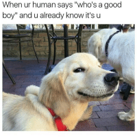 """Memes, 🤖, and My Favorites: When ur human says """"who's a good  boy"""" and u already know it's u @memes is my favorite account right now"""
