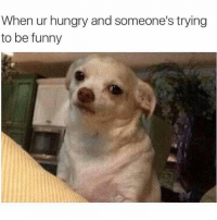 Funny, Hungry, and Memes: When ur hungry and someone's trying  to be funny SarcasmOnly