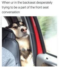 Awe doggo Pupper Ha ha. I'm weak flatlined dead pettypost nochill teamnoharmdone noharmdone: When ur in the backseat desperately  trying to be a part of the front seat  conversation Awe doggo Pupper Ha ha. I'm weak flatlined dead pettypost nochill teamnoharmdone noharmdone