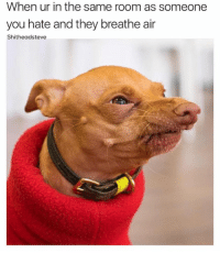 Cute, Dogs, and Memes: When ur in the same room as someone  you hate and they breathe air  Shitheadsteve Tuna the dog is soo cute ❤️