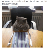 20 Funny Animal Memes That'll Make You Roar With Laughter: when ur mom calls u down for dinner but the  food isn't ready 20 Funny Animal Memes That'll Make You Roar With Laughter