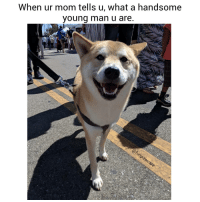 9gag, Animals, and Dad: When ur mom tells u, what a handsome  young man u are Thanks mah. Then why have I been single for years? 😭 😂 🐶 Tag your parents 💓 @funpawcare puppylove doglover puppies puppy pupper puppers puppiesofinstagram dogstagram dogs dog mom dad mother father love dogsofinstagram doggie doggies 9gag buzzfeed newpuppy newdog doglove doglovers furbaby venice venicebeach la cali california @9gag @barked @buzzfeed @buzzfeedanimals @ladbible @unilad @theellenshow @barstoolsports @cbsla @lnsta_dogs @dogsofinstagram @instagram @dogsbeingbasic @dogs @failsclip @funnyfailvideos @fun_bestvids @lol_vines @bestvidsnow @failsvids @animals.co @thedodo @boopmynose @dogsofinstaworld @pups @pawz @puppystagrams @animal_unity @dogs.lovers @animalove.co @cutepetclub @puppyscene @campingwithdogs @bestvinesnow
