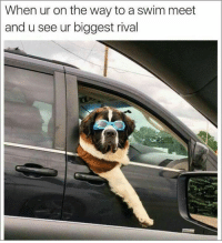 60 Funny Animals Memes For You If You Desperately Need A Laugh: When ur on the way to a swim meet  and u see ur biggest rival 60 Funny Animals Memes For You If You Desperately Need A Laugh