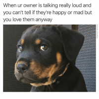 Funny, Love, and Sorry: When ur owner is talking really loud and  you can't tell if they're happy or mad but  you love them anyway Sorry I don't speak English