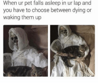 Death before dishonor: When ur pet falls asleep in ur lap and  you have to choose between dying on  waking them up Death before dishonor