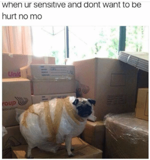 Animals, Funny, and Memes: when ur sensitive and dont want to be  hurt no mo  Unic  oup  elocation  lil 42 Funny Dog Memes That'll Make Your Day! - Lovely Animals World