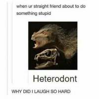 Lol, Friend, and Don: when ur straight friend about to do  something stupid  Heterodont  WHY DID I LAUGH SO HARD Lol I don't know why???