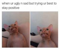 For more cute pics LIKE us at The Purrfect Feline Page: when ur ugly n sad but trying ur best to  stay positive For more cute pics LIKE us at The Purrfect Feline Page