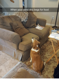 Food, Dog, and For: When vour blind dog begs for food <h2>Los perros ven cosas&hellip;hasta los pobres perros ciegos</h2>