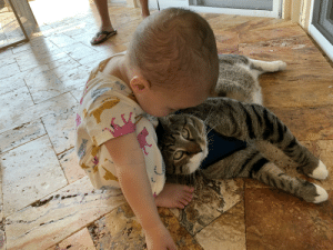 When we got Pancake he was a feral rescue who didn't like affection, and here he is now with his tiny human: When we got Pancake he was a feral rescue who didn't like affection, and here he is now with his tiny human
