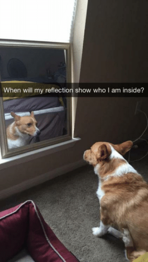corgikistan:  A Journey of Self Discovery: When will my reflection show who I am inside? corgikistan:  A Journey of Self Discovery