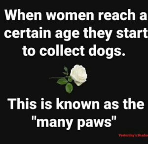 """Dogs, Memes, and Women: When women reach a  certain age they start  to collect dogs.  This is known as the  """"many paws""""  Yesterday's Shado Here's a thought:"""