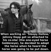 "Johnny Depp, Horse, and Sleepy Hollow: When working on ""Sleepy Hollow,""  Johnny Depp got so attached to  his co-star (the one-eyed horse  Goldeneye), he decided to adopt  the horse when he heard the  horse was going to be put down. https://t.co/nDsfyFhLRR"
