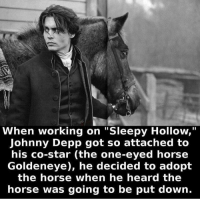 "Horses, Johnny Depp, and Memes: When working on ""Sleepy Hollow,""  Johnny Depp got so attached to  his co-star (the one-eyed horse  Goldeneye), he decided to adopt  the horse when he heard the  horse was going to be put down. ❤️ Goldeneye!"