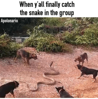 Memes, Snitch, and 🤖: When y all finally catch  the snake in the group  Apolonario When you find the leak 😆😆😆😆... Go follow @apolonario.2 Or @apolonario.1 ..for hilarious memes .. . haraambanter lol lmfao funnyshit funny shitistoofunny thisshitisfunny savageasf nochill girlswillbegirls dogs like4like likeforlike thefuckery powermeme photooftheday instahappy whodidthis instagood funnypictures teammemewar memewarsroastnetwork snitch lit deeznuts wtf facts relationshipgoals rat followme