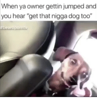 """Memes, Jumped, and 🤖: When ya owner gettin jumped and  you hear """"get that nigga dog too"""""""