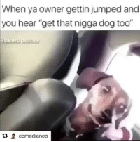 """Funny, Jumped, and Dog: When ya owner gettin jumped and  you hear """"get that nigga dog too""""  ea  L1 comediancp 😩😩😂😂"""