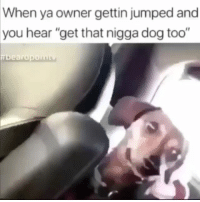 """Memes, Jumped, and 🤖: When ya owner gettin jumped and  you hear """"get that nigga dog too"""" Dog was like what that got to do with me? Regrann from @kingkeraun - 😂😂 - regrann"""