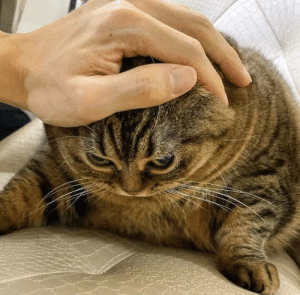 Dank, Head, and Memes: When you're upset but she gives you head scratches by jefewyatt MORE MEMES