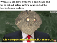 House, Sun, and Dark: When you accidentally fly into a dark house and  try to get out before getting swatted, but the  human turns on a lamp  Sun  Didn't expect that reaction, but that's OK. s Combine for double yield via /r/MemeEconomy https://ift.tt/2OR8LKV