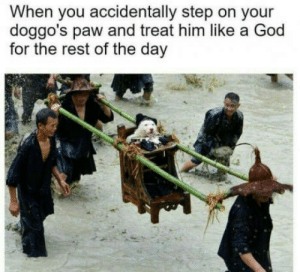 God, Rest, and Step: When you accidentally step on your  doggo's paw and treat him like a God  for the rest of the day  GO O D B O Y E