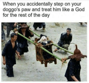 God, Rest, and Step: When you accidentally step on your  doggo's paw and treat him like a God  for the rest of the day And yet it deserves better..