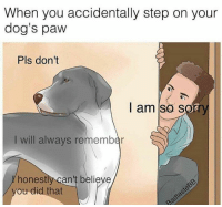 Funny, Dog Paw, and  Pawe: When you accidentally step on your  dog's paw  Pls don't  I am so s  I will always remember  honest  can't believe  ou did that Foreal though