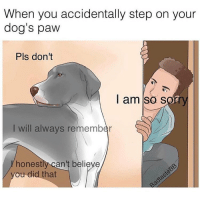 Girl Memes, Forgive Me, and Pupper: When you accidentally step on your  dog's paw  Pls don't  I am so s  I will always remember  honest  can't believe  ou did that Pls forgive me pupper @badtastebb