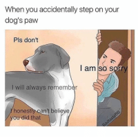 I'm sorry buddy 😩: When you accidentally step on your  dog's paw  Pls don't  I am so sory  I will always remember  honestly can't believe  ou did that I'm sorry buddy 😩