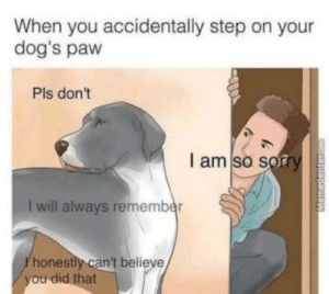 Dogs, Sorry, and Step: When you accidentally step on your  dog's paw  Pls don't  I am so sorry  I will always remember  honestly can't believe There is no worse feeling.