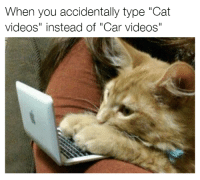 "Cat sounds compilation. Car memes: When you accidentally type ""Cat  videos"" instead of ""Car videos"" Cat sounds compilation. Car memes"