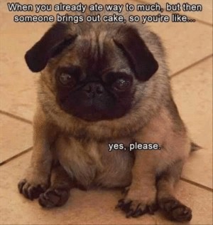 Animals, Dogs, and Memes: When you already ate way to much, but then  someone brings out cake, so youre likesoo  yes, please Dog Memes Of The Day 32 Pics – Ep33 #dogs #doglovers #lovelyanimalsworld - Lovely Animals World