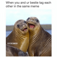 Meme, Memes, and Tagged: When you and ur bestie tag each  other in the same meme  QBROKERETCHES Memes: making the world a better place since 2014. (@claudwithnojob)