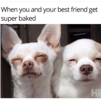 TAG your partner in crime! Follow my backup page 👉 @marijuana: When you and your best friend get  super baked TAG your partner in crime! Follow my backup page 👉 @marijuana