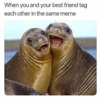 Best Friend, Bitch, and Meme: When you and your best friend tag  each other in the same meme Har har har bitch u funnnyyyyyy 😂😂 tag your bestieeee💕