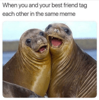 Best Friend, Meme, and Memes: When you and your best friend tag  each other in the same meme Haiii @thespeckyblonde 👯‍♀️ goodgirlwithbadthoughts 💅🏼
