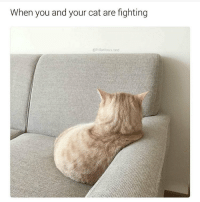 @hilarious.ted has the best animal memes: When you and your cat are fighting  hilarious. ted @hilarious.ted has the best animal memes