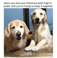 Weed, Marijuana, and Friend: when you and your friend are both high in  public and you're trying to keep it together TAG your homies 😂