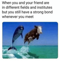 Memes, True, and Strong: When you and your friend are  in different fields and institutes  but you still have a strong bond  whenever you meet Haha!! True 😛