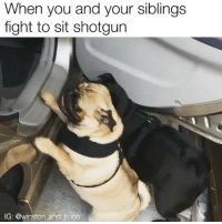 Relatable, Vicious, and Hugo: When you and your siblings  fight to sit shotgun  IG: @winston and hugo the most vicious battle in human history