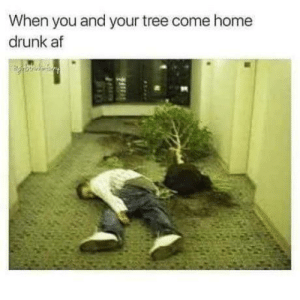 Man was I Trunk last night.: When you and your tree come home  drunk af Man was I Trunk last night.