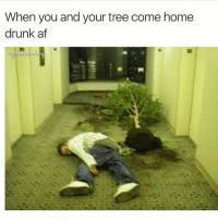 Af, The Dab, and Dank: When you and your tree come home  drunk af My stupid tree is a lightweight 🙄 @girlsthinkimfunny is all time favorite account @girlsthinkimfunny - - *follow @girlsthinkimfunny - - - follow4follow funny funnyAF tinder bumble fuckboy ex dating relateable wcw meme memes comedy likes pettyaf nochill itslit dank dabs dankmemes triggered followme drunk f4f melaniatrump yeezyboost khloekardashian