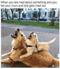 Memes, Mad, and Mom: When you are mad about something and you  tell your mum and she gets mad too mess with me and you mess with my mom too