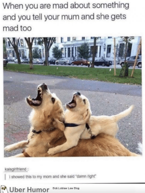 """Love, Moms, and Tumblr: When you are mad about something  and you tell your mum and she gets  mad too  kaisgirlfriend:  i showed this to my mom and she said """"damn right""""  Bob Loblaw Law Blog  Uber Humor failnation:  Gotta love moms"""