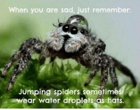 Spider: When you are sad, just remember:  Jumping spiders sometimes  ear water droplets as hats.