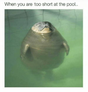 Pool, Too Short, and You: When you are too short at the pool..