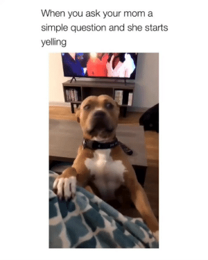 dogsofinstagram: When you ask your mom a  simple question and she starts  yelling dogsofinstagram
