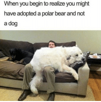 polarity: When you begin to realize you might  have adopted a polar bear and not  a dog